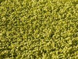 Groen hoogpolig vloerkleed of karpet